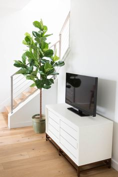 7 simple tips that will keep your fiddle leaf fig tree alive and happy! Indoor Fig Trees, Tall Indoor Plants, Living Room Decor, Living Spaces, Style Me Pretty Living, Beautiful Home Designs, Fiddle Leaf Fig, Home Decor Furniture, Decor Styles