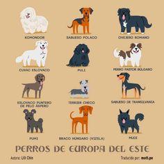 Perros de Europa del Este.