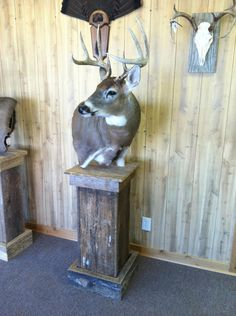 This is a custom made deer mount that I sell local and just thought I would put it on etsy to see if there was a need to buy. Look at the pics to see the deer mounted all you need to so is take the display to your Taxidermy and he will know how to shoulder mount the deer to fit.