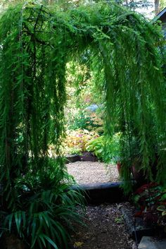 bald cypress instead of vines for the arbor.  makes me think of a secret garden.  Eclectic Landscape by Jay Sifford Garden Design