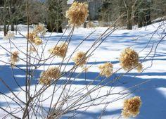 Grün im großen weißen Norden: Kalter Winter und warme Schokoladenerlebnisse: Kanada hatte es mir für den Anfang leicht gemacht. Die ersten beiden Tage...