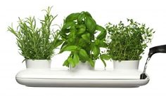 Doniczka na zioła (potrójna) Herbs&Spices Sagaform