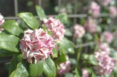 Top 20 des plus beaux arbustes à fleurs - M6 Deco.fr Patio, Culture, Outdoor, Garden, Plants, Single Flowers, White Flowers, Small Garden Trees, Lawn And Garden