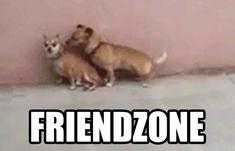 Friendzone - GiFeate