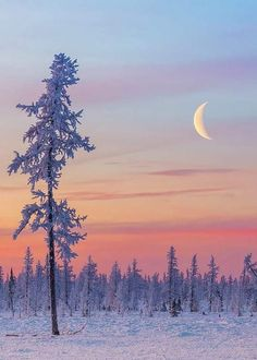 crescent over white forest