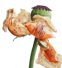 Vivienne Rew: Winner of our 'Plant Life – Botanical Illustration' Comp