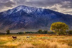Fields and Mountains near Bishop, California #autumn2012  (making me a bit home sick for this part of CA)