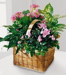 Pink Assortment Basket ... $97