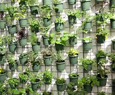 Easy to make vertical planter: raster + lots of pots with some way to hang them