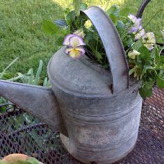 Old water can planter Garden Inspiration, Garden Ideas, Washroom Design, Watering Cans, Spring Fever, Back Gardens, Modern Materials, Backyards, Teacher Appreciation