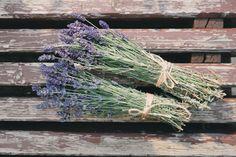 Lavendel gehört genau wie Salbei zur Familie der Lippenblütler und wächst in ganz Südeuropa. Besonders bekannt ist Lavendel für seine stark beruhigende Wirkung auf unser Nervensystem. Insbesondere bei Depressionen, Schlafstörungen und innere Unruhe finden die berühmten kleinen Lavendelsäckchen oder Lavendelsprays großen Anklang. Doch Lavendel kann weitaus mehr. Es bewirkt durch seine antiseptischen Eigenschaften kleine Wunder bei Entzündungen, insbesondere auch im Hals- und…