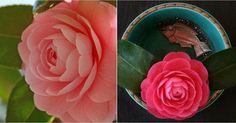 Descubre toda la información necesaria en este interesante artículo (e imágenes que merecen la pena ¡y mucho!). Colorful Garden, Pablo Neruda, Flowers, Plants, Popular, Gardens, Home, Color Sheets, White Flowers