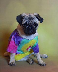 Tie Dye Pug Puppy