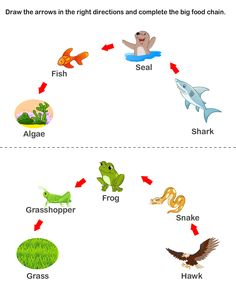 Food Chain Worksheets (C2, W3)