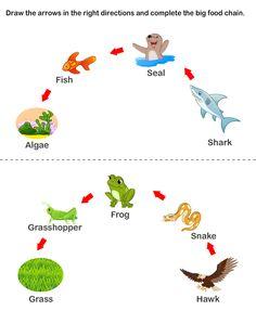 Food Chain Worksheets (C2, W3)