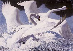 "Charles Frederick Tunnicliffe (British, 1901-1979) - ""The Rivals"""
