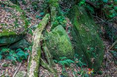Rocks with Moss at Blue Mountains