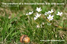 Stop this Earth Day month to think about the power of a single acorn to create a forest. #earthday