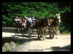 Wildwood Stables Horse Drawn Carriage Tour  Acadia National Park, Maine Carriage Roads  Mount Desert Island USA    The Carriages Roads are also shared by hikers and cyclists. Some of the Carriage Roads are located on private property and are posted as excluding biking.