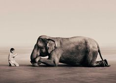 """Gregory Colbert Ashes and Souls """"In the beginning were the elephants flying.."""""""