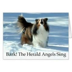 Funny Sheltie Gifts - T-Shirts, Art, Posters & Other Gift Ideas ...