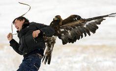 eagle desktop wallpaper hd pics