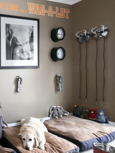 Dog Room Decor On Pinterest Dog Rooms French Bulldogs And Bulldogs