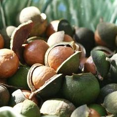 Macadamia Nut Oil: Packed with vitamins excellent for dry and mature skin. Anti Cholesterol, Macadamia Oil, Moisturize Hair, How To Get Rid Of Acne, Plantar, Hair Oil, Great Hair, Makeup Inspiration, Skin Whitening