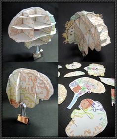 Science Paper Model - Brain Atlas Free Paper Craft Download | PaperCraftSquare.com