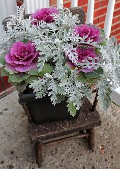 ornamental cabbage and dusty miller from Yonder Farms, troy, ny -- Apple Orchard, Pumpkin Patch, Gift Shop by Adirondack Girl @ Heart Winter Planter, Fall Planters, Flower Planters, Garden Planters, Autumn Planter Ideas, Geraniums Garden, Container Flowers, Container Plants, Container Gardening