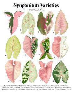 Garden Plants, Indoor Plants, House Plants, Plant Wall, Plant Decor, Leaf Identification, Pink Plant, Variegated Plants, Leaf Prints