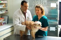Meet Ahna Brutlag Dvm Ms Assistant Director Of Veterinary