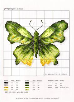Farfalla Verde