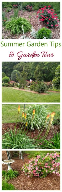 Join me for a garden tour and lots of summer garden tips to ensure that your garden is the one of your dreams. #ad #LiveLifeOutside @trugreen