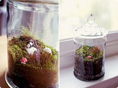 Reference for terrarium centerpieces.