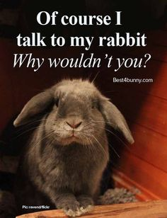 Talking to your rabbits... We talk to our rabbits all the time, & yes they do listen to you (just watch their ears) www.best4bunny.com