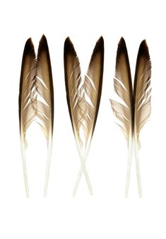 semaphore feathers | STILL (mary jo hoffman)