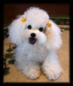 """Receive wonderful ideas on """"poodle dogs"""". They are actually offered for you on our web site. Cute Puppies, Cute Dogs, Dogs And Puppies, Doggies, Little Dogs, Poodle Cuts, Dog Artist, Love My Dog, Dog Memorial"""