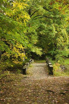Fall Bridge by Christina Rollo