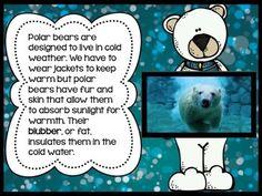 *FREEBIE* Chillin' Out With Polar Bears - A fun polar bear informational book/PowerPoint presentation.