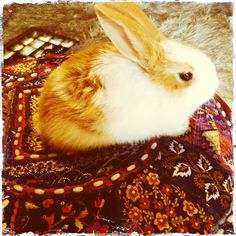 Whats a music studio without a baby bunny to show how comfy the recycled indian wedding sari cushions are.