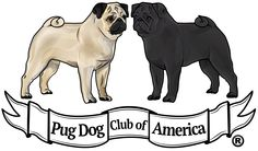 The Pug Dog Club of America is the American Kennel Club's parent club for the Pug breed. No other club is authorized to represent the Pug with the AKC. Pug Breed, Parent Club, Pugs, Illustration, Eps Vector, American, Crafts, Art, Doggies