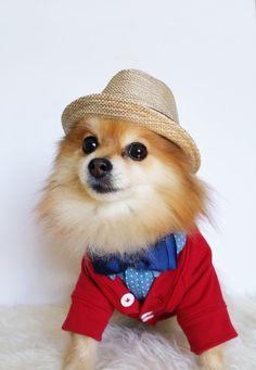 6108702b71f 9 Best Dog Fedora images