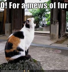 O! For a mews of fur...