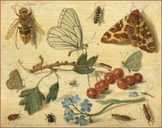 Jan van Kessel the Elder 17th cent. Flemish painter specializing in botany and insects