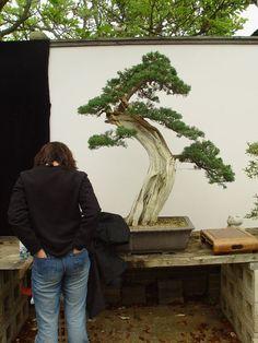 About Herons Bonsai Bonsai Garden, Bonsai Trees, Bonsai Shop, Bonsai Nursery, Largest Waterfall, Miniature Trees, Elizabeth Banks, Herons, Bonsai
