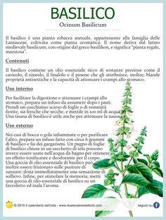Basilico (Ocinum Basilicum)