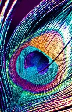 love peacock feathers! The colors are gorgeous and the texture looks great
