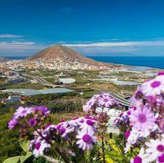 Montaña de Guia y flores de mayo.GRAN CANARIA.