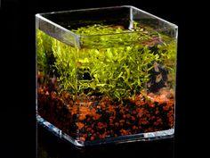 die besten 25 algen im aquarium ideen auf pinterest algen aquarium aquarium gestalten und. Black Bedroom Furniture Sets. Home Design Ideas